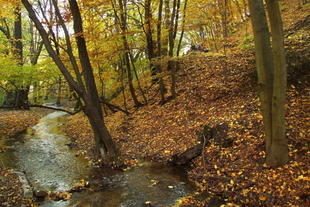 Szalajka-patak Bükk erdő