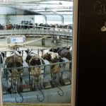 Újra lehet pályázni az állattartó telepek fejlesztési támogatására