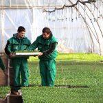 Újabb pályázatot hirdettek a kertészeti üzemek támogatására