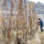 Ötmilliárdos pályázat zártkertek agrárhasznosítására