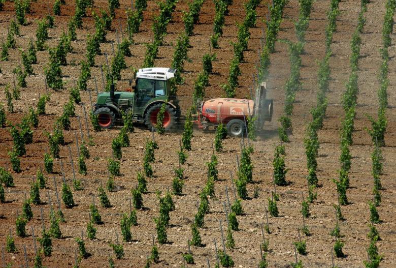 szőlő-szőlőpermetezés