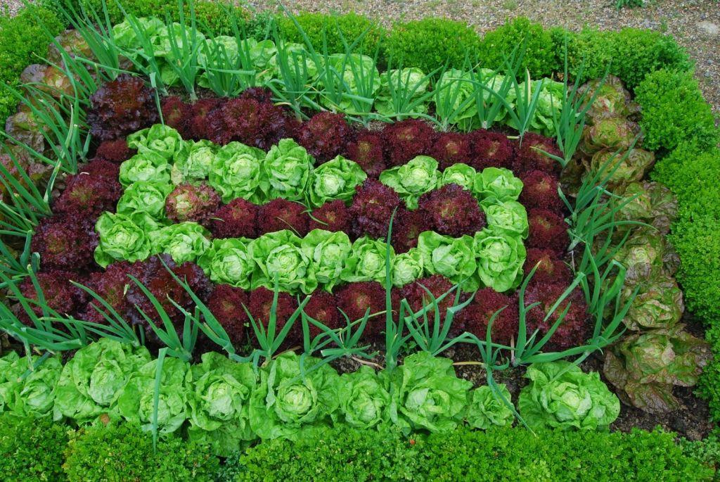 növények őszi vetésre