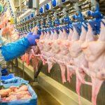 200 milliárd forintos keretösszegű élelmiszeripari fejlesztésekre várják a pályázatokat
