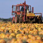Új agrárpályázatok 527 milliárd forint értékben