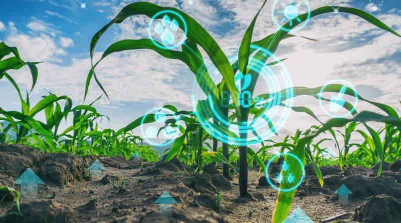 agrárstratégia_kutatás trend fejlesztés