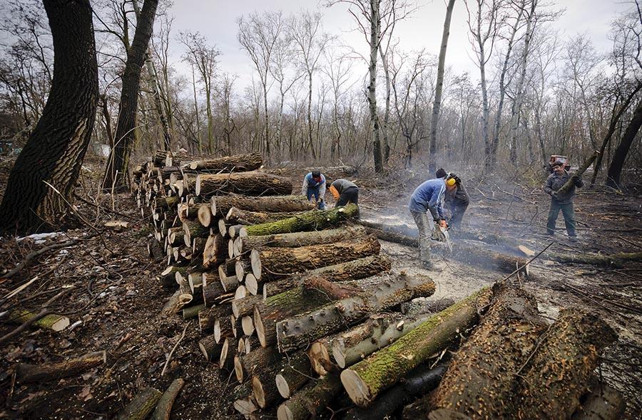 erdészet-fakitermelés