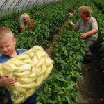 Nagyobb teret kapnak a kistermelők