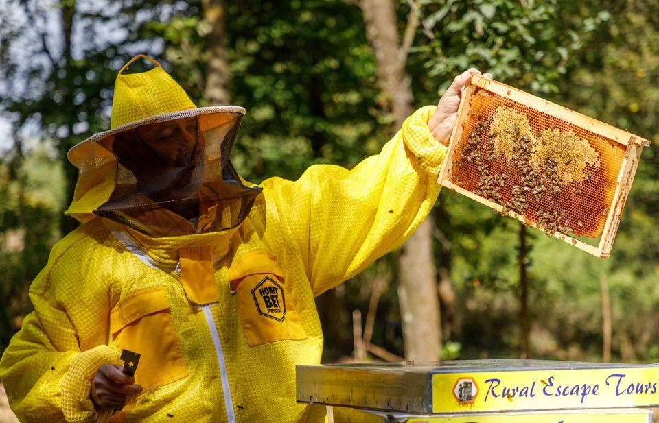 méhészet méhhotel kaptár