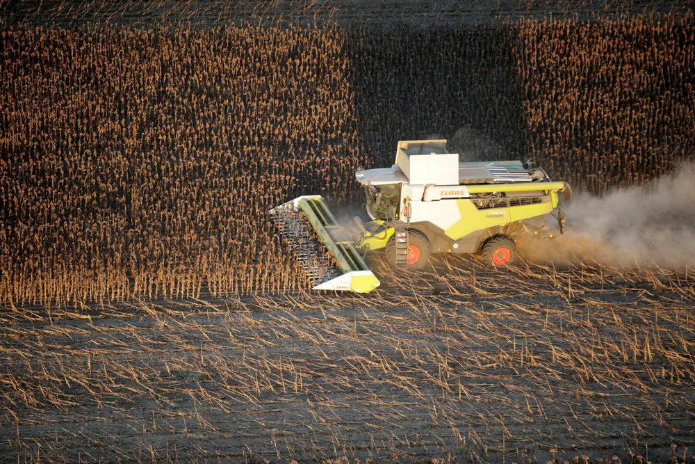 napraforgő-aratás-kombájn-mezőgazdaság